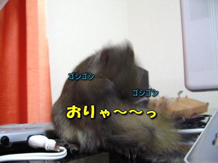 a0015164_20361528.jpg