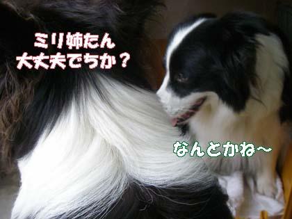 f0114893_1014149.jpg