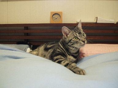 ネコ、しかたなく_b0114004_20245061.jpg