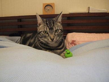 ネコ、しかたなく_b0114004_20245860.jpg