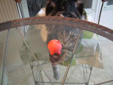 ネコ、しかたなく_b0114004_20252770.jpg