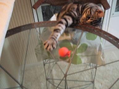 ネコ、しかたなく_b0114004_20254141.jpg