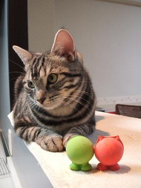 ネコ、しかたなく_b0114004_2025513.jpg