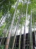 ANAOGネットワーク「エンジェル・リンク」主催            鎌倉写真教室に参加して。_d0046025_221002.jpg
