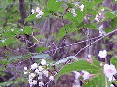 植物観察会・日向山2007秋_f0019247_1742232.jpg