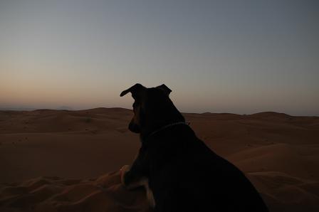 その砂丘からぐるっと360度。_e0066474_2202741.jpg