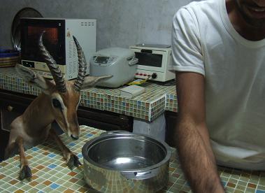 ラマダン中、夕食前は大忙し。_e0066474_2282491.jpg