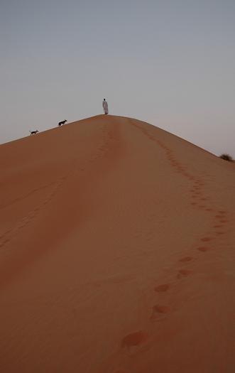 散歩に行くとかならず登るちょっと高い砂丘_e0066474_293335.jpg