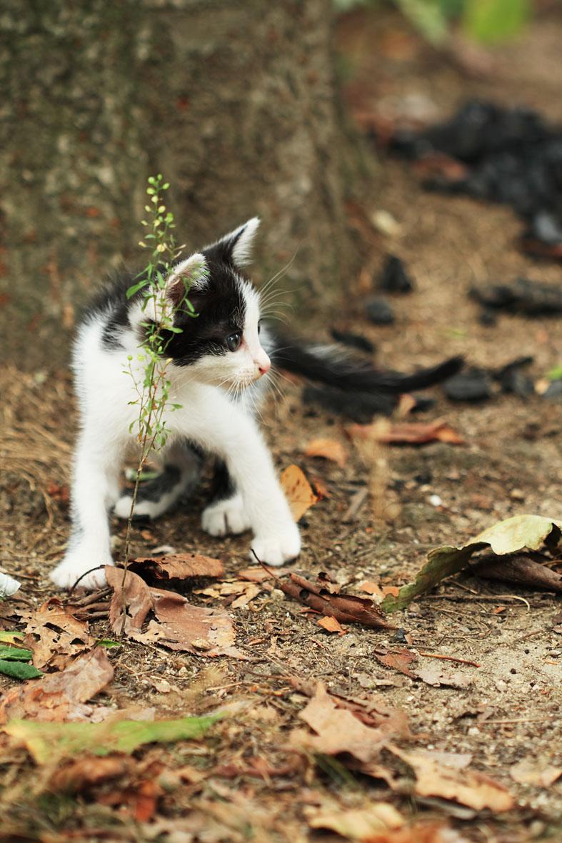 こ猫_b0107576_2082395.jpg