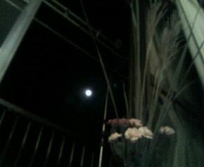 お月見♪_d0062076_8171211.jpg