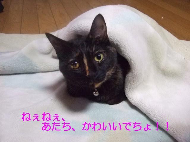 b0087400_0133572.jpg