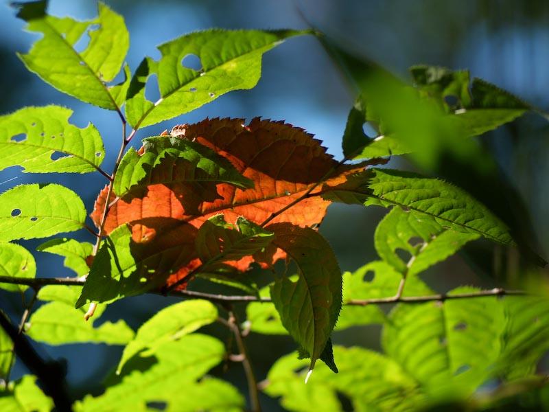 秋の入り口マクロで散歩_c0137403_16283468.jpg