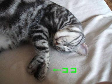 ネコ、じゃんけんぽん!_b0114004_20422089.jpg