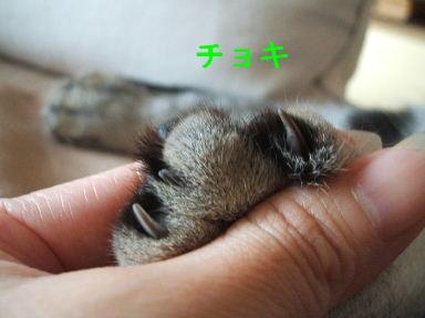 ネコ、じゃんけんぽん!_b0114004_20422947.jpg