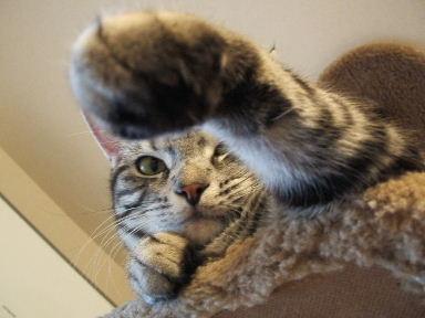 ネコ、じゃんけんぽん!_b0114004_2042810.jpg