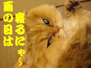 f0138304_9505931.jpg