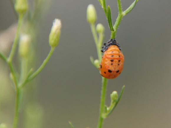 住宅地の草むらで見つけました_b0025008_1535360.jpg