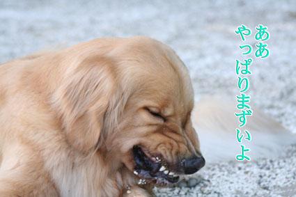 f0134923_2221364.jpg