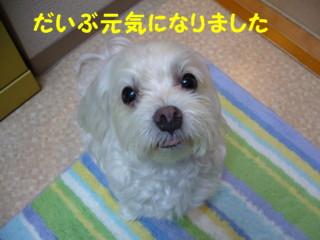 f0145192_162587.jpg