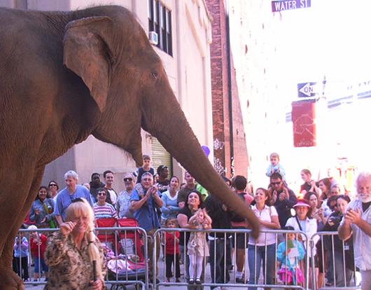 ゾウの絵描きさん Dumbo Art Under the Bridge Festival_b0007805_22154347.jpg
