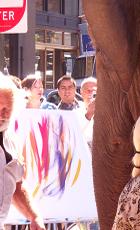 ゾウの絵描きさん Dumbo Art Under the Bridge Festival_b0007805_22163775.jpg
