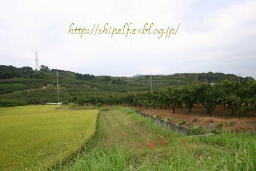 今日から十月~☆  秋色いろいろ_c0134734_11185220.jpg