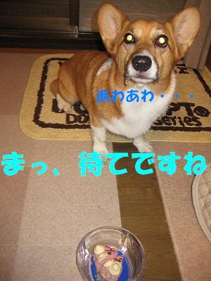 f0087143_1658454.jpg