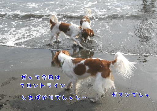 d0013149_046897.jpg