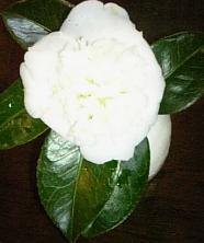 喫茶の花たち_f0017696_16144881.jpg