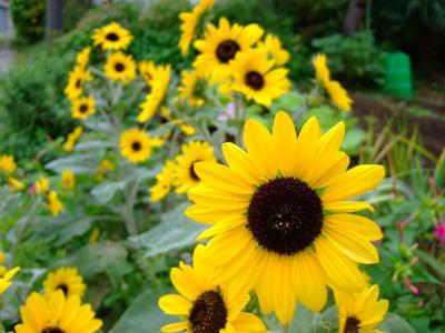 10月2日黄色い花