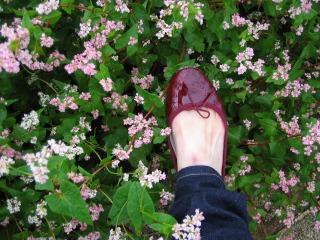 赤い靴履いて、赤そば畑で_b0117564_1772520.jpg