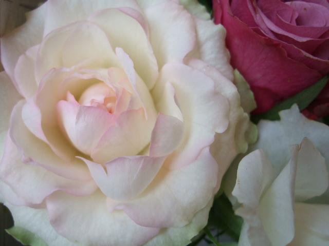 オークリーフ(薔薇と秋桜)_f0049672_11151438.jpg