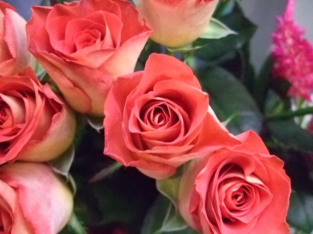 オークリーフ(薔薇と秋桜)_f0049672_1123333.jpg
