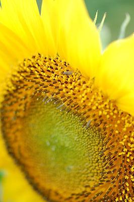 2007年9月山中湖花の都公園_c0135079_22292589.jpg