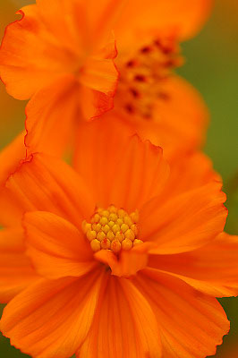 2007年9月山中湖花の都公園_c0135079_22293747.jpg