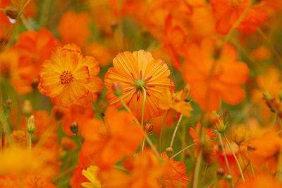 2007年9月山中湖花の都公園_c0135079_2229447.jpg