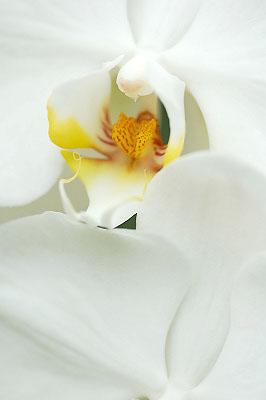 2007年9月山中湖花の都公園_c0135079_22295915.jpg