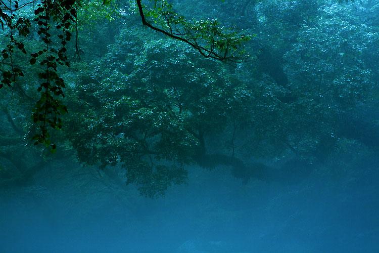静寂の森_a0062300_10525651.jpg