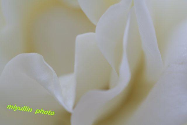 b0109602_1759813.jpg