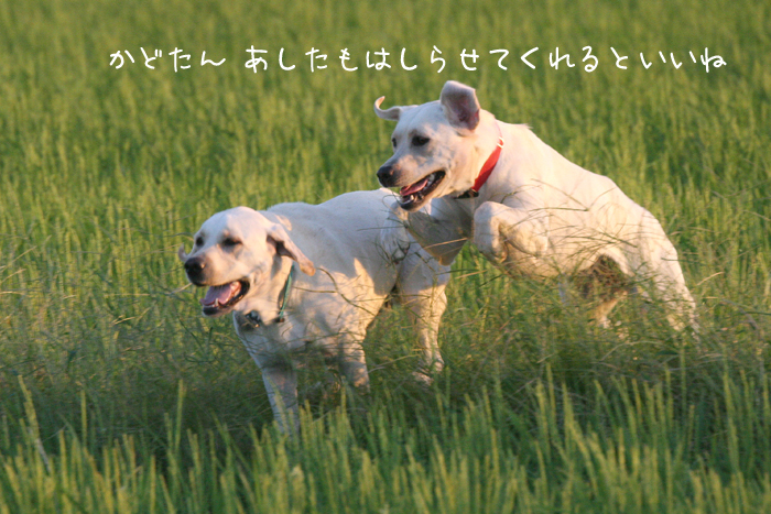 c0089005_157055.jpg