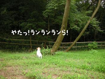 f0129214_1650422.jpg