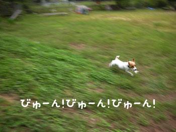f0129214_1714773.jpg