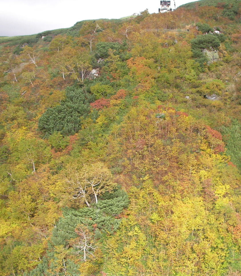 大雪山旭岳の姿見の池へ_f0100593_12332252.jpg
