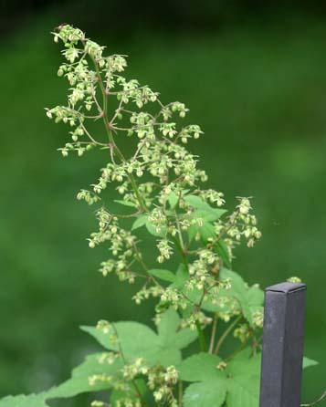 秋の花粉症_f0088231_1533439.jpg