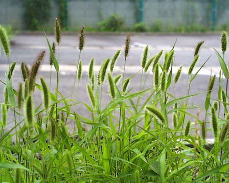 秋の花粉症_f0088231_1542650.jpg