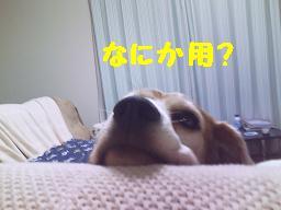 b0098660_2302774.jpg