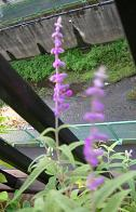 咲いています_f0139963_642239.jpg