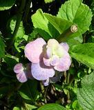 咲いています_f0139963_6432046.jpg