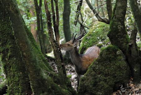 846 屋久鹿の見送り_c0001773_1647348.jpg