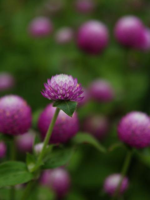 実家近辺の花など。_a0025576_2342059.jpg